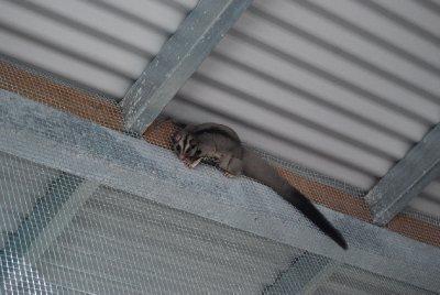 Hei der oppe! lekne små krabater!!!!!!