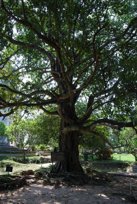 Det magiske treet....