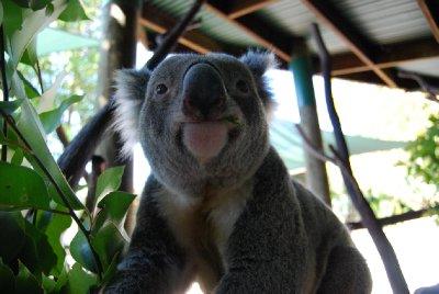 Glenn!!!! Den nydelige koalaen :-)