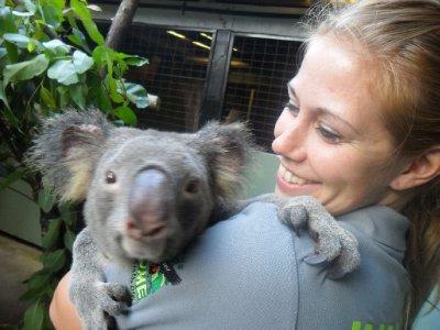 Kiiiiiiiip! Den besteste koalaen i hele verden!!!!! :-)