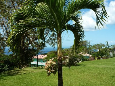 St_Lucia__8.jpg