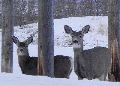 "My ""Deer"" Friends on New Year's Day"