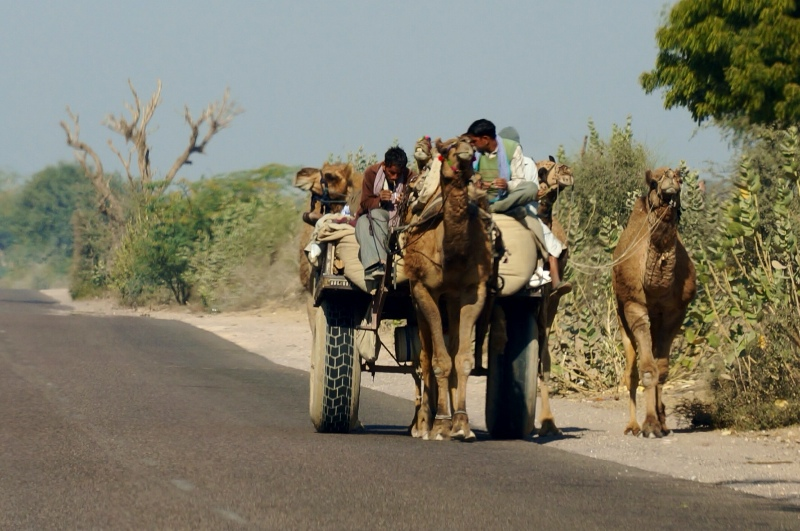 Road photo - camel cart