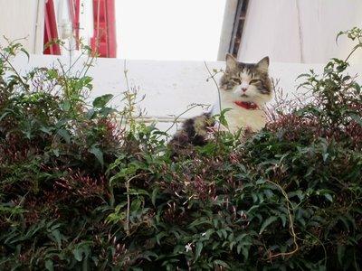 Cat with vines