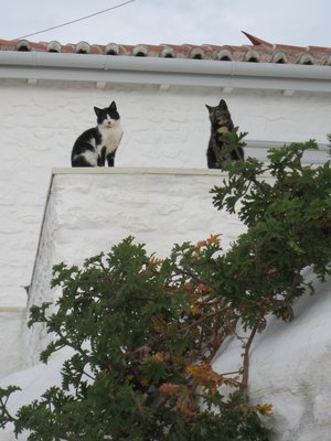 Two cats on wall