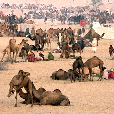 pushker fair