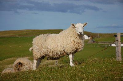 os moradores mais ilustres das Highlands