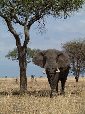 Such amazing creatures - Tanzania