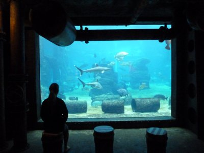 The aquarium at uShaka.  Durban