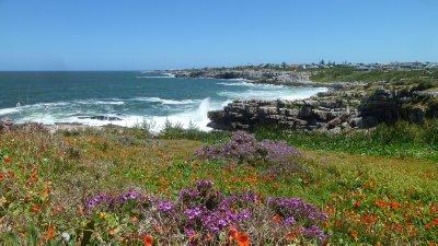 Hermanus coastline.