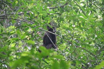 Khao Yai National Park - Thailand (26)