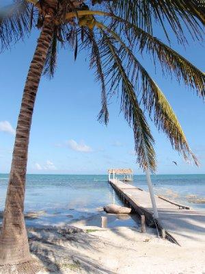 sea and palmtree