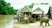 Elephants on the Mae Kok River