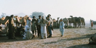 Ade camel trading