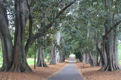 Treasury Garden Pathways