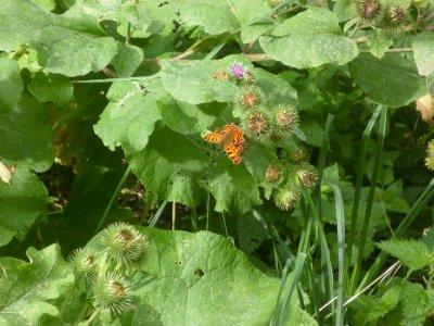 A_butterfly__duh.jpg