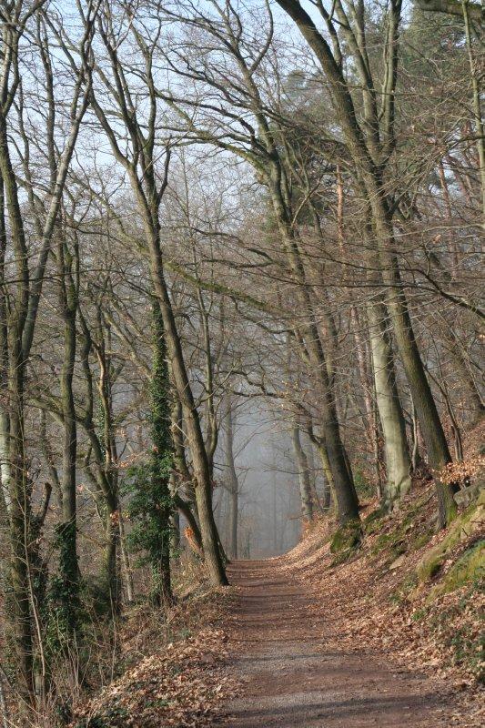 large_Heidelberg..rie_023.jpg