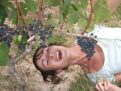 Wine tasting, Mendoza