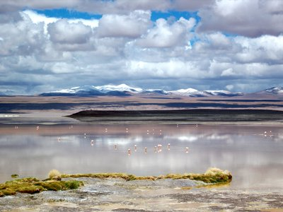Laguna colorada, one of the most beautiful and colourful places I have seen