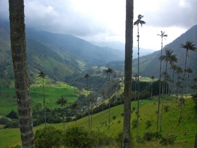The stunning Valle de Cocora, Colombia