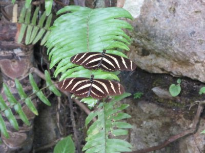 Copán Butterfly Garden