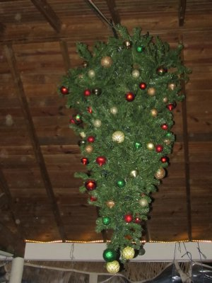 Christmas tree hanging upside down from the ceiling of a bar on Roatán