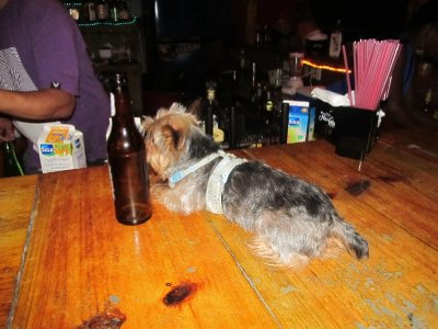 Even the dog is out drinking on Christmas Day