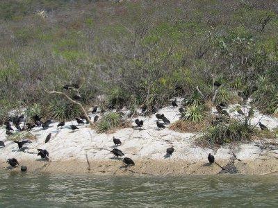 Vultures in the Cañon del Sumidero