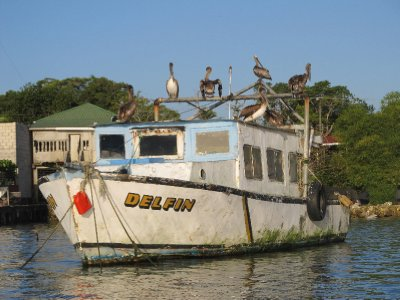 Boat with birds in Livingston