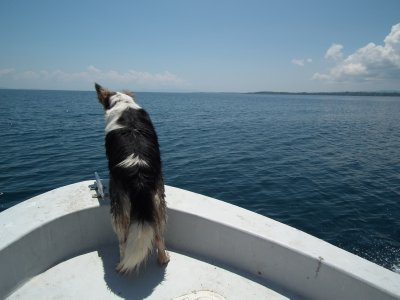 The dog kept look out for whales too