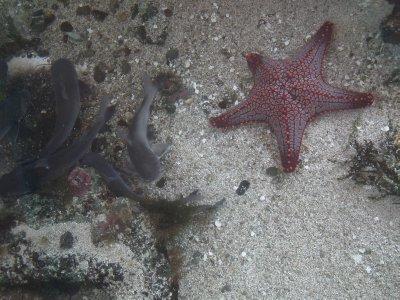 Red spotty starfish and fish