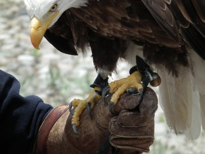 Look at those talons!