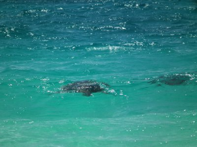 Turtles near the shore
