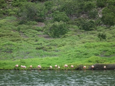 Some flamingoes in a huge crater island we could only look into from the boat