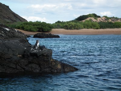 Penguins next to a beach, a bizarre sight