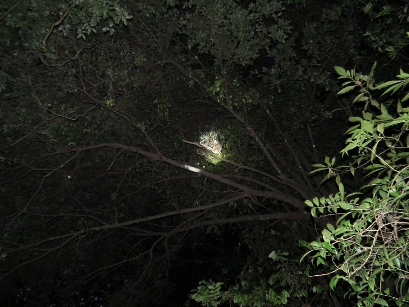 Our first proper glimpse of a sloth