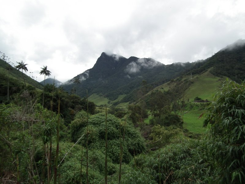 Entering the Valle de Cocora