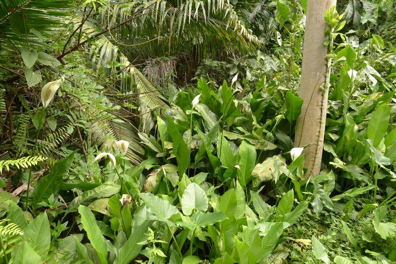 Cahuita Park