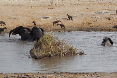 Elephants and Hyenas at the Waterhole