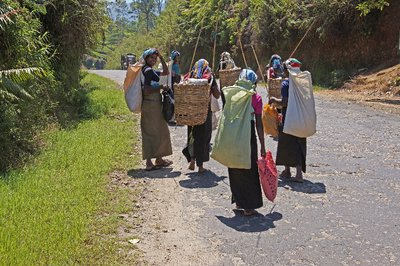 Tea Pickers going Home