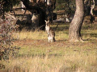 Canberra_i..ng__15_.jpg