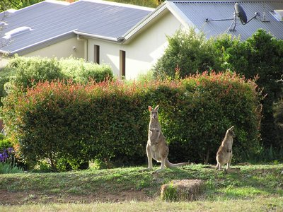 Canberra_i..ng__18_.jpg
