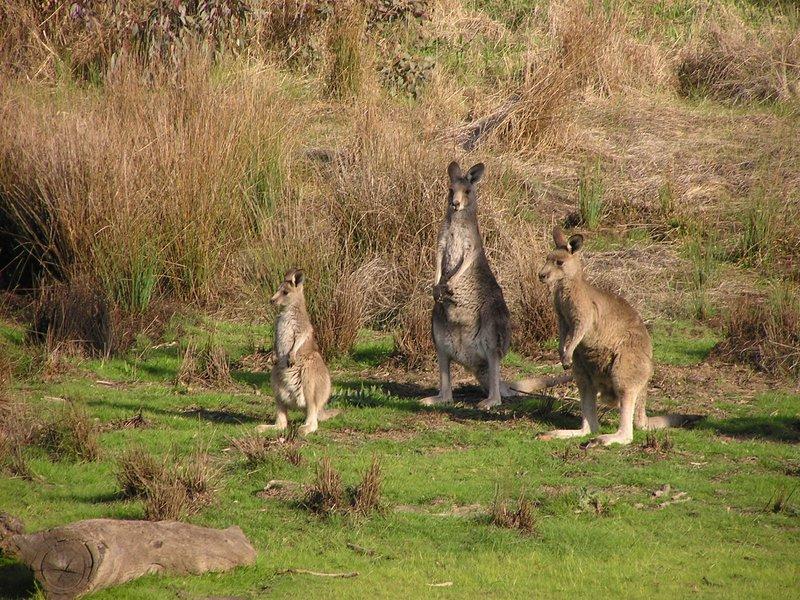 large_Canberra_i..ng__11_.jpg