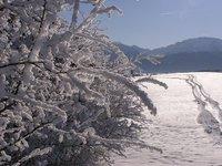 Winter_walks__12_.jpg