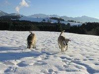 Winter_walks__3_.jpg