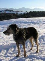 Winter_walks__4_.jpg
