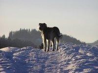 Winter_walks__8_.jpg