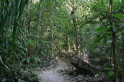 cabo blanco skog