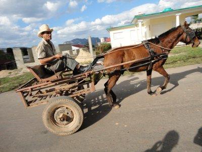 lokal transport