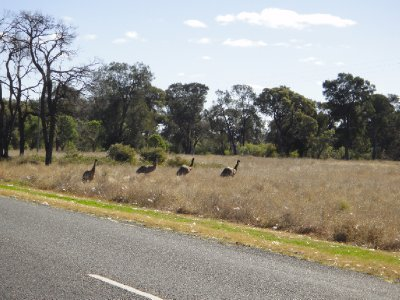 Emu's Garah